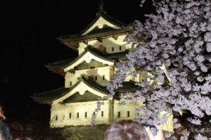 弘前城満開